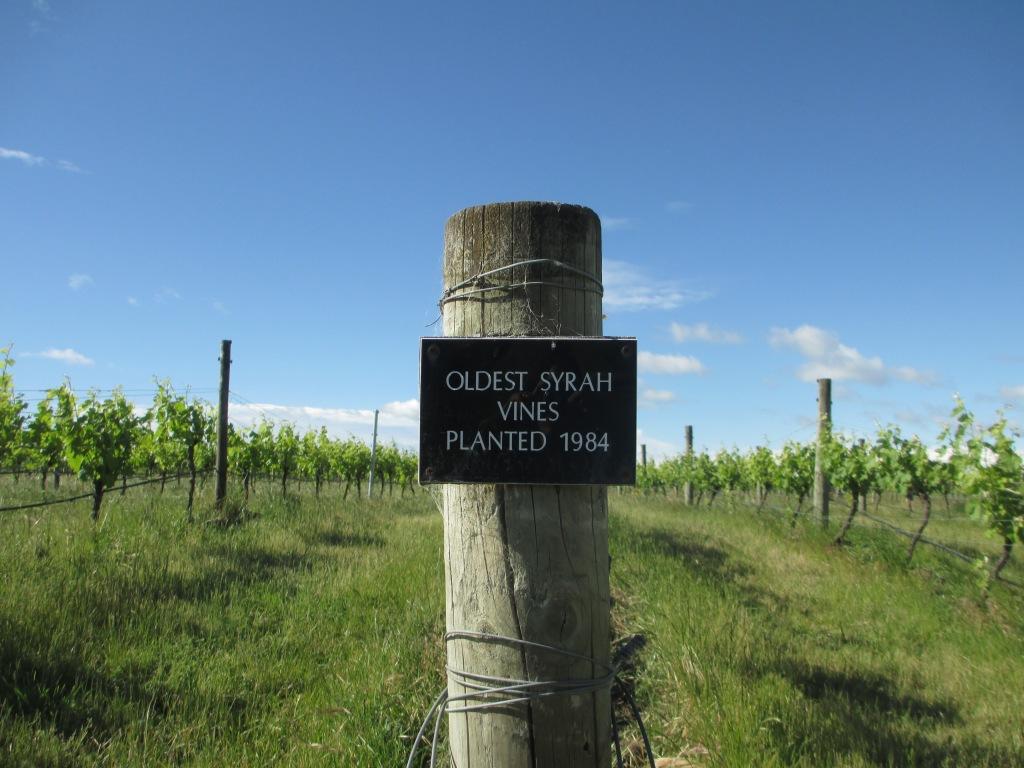 Vineyard2014 017